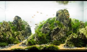 沉木青龙石水草造景90CM尺寸设计64