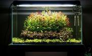 水族箱造景和大家分享我的一口荷兰式造景草缸