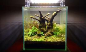 20cm小缸水草缸树根造景