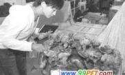 天然玉石鱼缸叫价13万-14万(图)