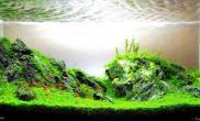 最近偏爱石景缸水草缸有动手的想法了鱼缸水族箱