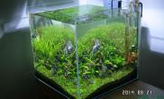 水草造景40方缸水草缸更新修剪后状体水草缸化腐朽为绿油油呀鱼缸水族箱鱼缸水族箱鱼缸水族箱