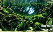 2015年世界水草造景大赛获奖作品前10名