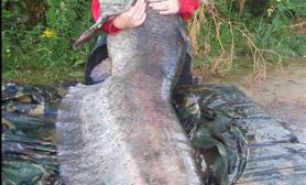 女子独钓巨型鲶鱼破记录(多图)
