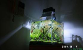 40方缸 更新第4周 草缸状态图鱼缸水族箱鱼缸水族箱鱼缸水族箱鱼缸水族箱