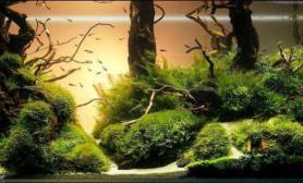 简单的森林造景缸