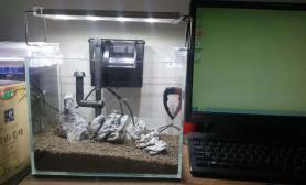 水草造景办公室桌面小缸 起名银兔望月