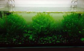 水草造景1米2  水草近照