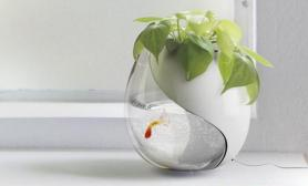 绿色设计的生态环境鱼缸一侧带花盆(多图)