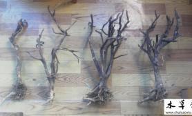 搞到4根木头水草缸如何使用?