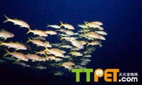 如何防治鱼的出血病