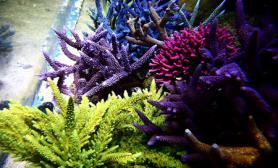 海水缸生物美图照片欣赏