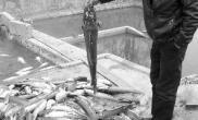 河水养鱼30多口鱼塘遭殃每天捞起上千条死鱼(图)