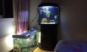 水草造景新手鱼缸水草缸改善后水草缸求指教鱼缸水族箱