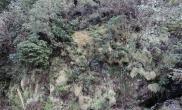 植物原生境游历记录03(泥炭藓)