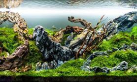 另类的岩石造景:水花园