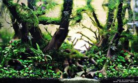 沉木水草造景(45CM及以下)