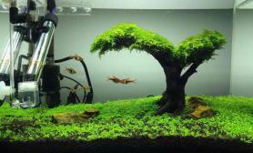 40小缸水草缸moss树+草坪