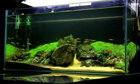 原创造景鉴赏曾经的90迷你矮水草缸造景