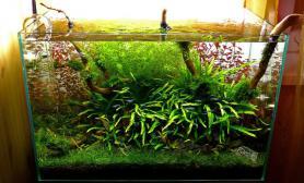 水草缸造景沉木水草泥化妆砂青龙石60CM尺寸设计59