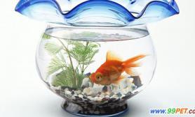 怎么防止金鱼长寄生虫问答(图)