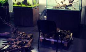 国外精品水景店水草造景鱼缸欣赏