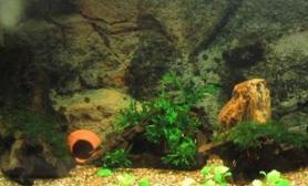 岩礁生态缸的日常维护和管理(图)