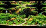 [转载]个人较为喜欢的几个莫丝水草造景