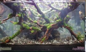 60CM鱼缸沉木MOSS造景