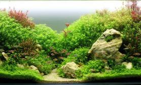 沉木青龙石水草造景120CM尺寸设计14
