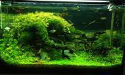 水草缸造景石头沉木搭配野外样貌