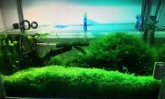 [其它]【赢阳光几何全光谱LED】草缸的魅力