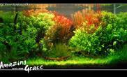 (转贴)Amazing Grace