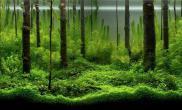 [交流]震撼的水草造景