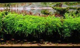 2015 IAPLC世界水草造景大赛《春绿南岸》