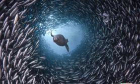 海洋生物摄影欣赏(多图)