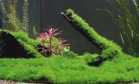 绿水产生的原因和解决方法(图)