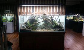 首位水族水草缸造景精品店水景作品展示01