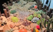 沉木青龙石动、植物造景缸-03