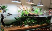 自己第一个水陆缸鱼缸水族箱感谢论坛上朋友的帮助水草缸发图片汇报一下鱼缸水族箱