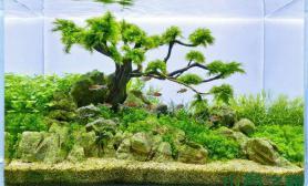 水族箱造景小树迎风亦美丽水草缸水草造景皆动人沉木杜鹃根青龙石水草泥