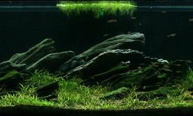 沉木青龙石原生态鱼缸11