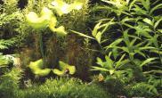 强光栽培水草的注意事项