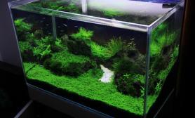沉木青龙石水草造景60CM尺寸设计11