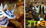 颜色艳丽的神奇海洋生物海蛞蝓