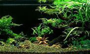 【分享】以阴性水草为主120草缸造景
