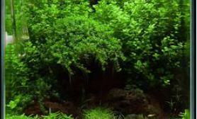 40的小缸迷你矮这样垂下来沉木杜鹃根青龙石水草泥沉木杜鹃根青龙石水草泥