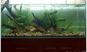 水草缸造景沉木水草泥化妆砂青龙石120CM尺寸设计46