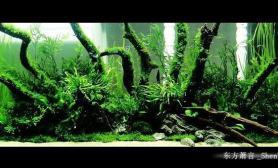 新开1图片2米水草缸-《热带鱼林》