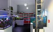 国外水族店水草缸造景AquastudioAcquariAltamareaVarese